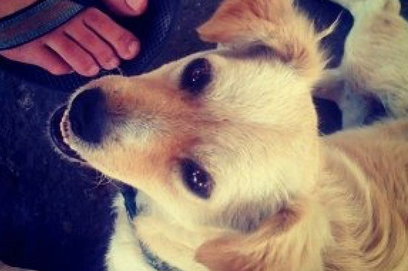 Instagram's journey from one dog photo to $100billion business in just 10 years